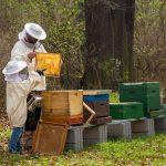 Wie kümmern Sie sich um einen Bienenstock?